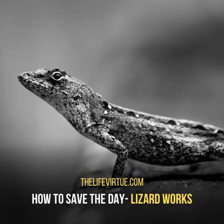 Lizard saves the day - Unethical life pro tips